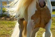 heste og føl