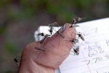 zanzare trappola