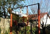 calisthenics and fitness