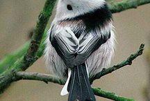 Nature: birdies