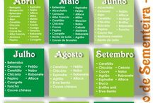 calendario de sementeira-legumes