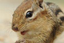 cutest creatures / animals