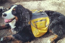 Tails on the Trail / tips for bringing along your best friend