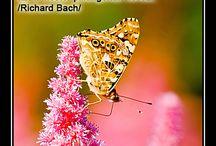 Idézetek - Richard Bach / Lélekmozaikok: http://lelekmozaikok.cafeblog.hu Történetek...Érzések...Gondolatok... Lelked építőkövei a megismerés útján...