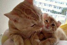 17. Katzen / Cats, einfach LIEBENSWERT❤