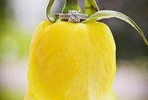 Wedding Photography / by Amanda Brazelton