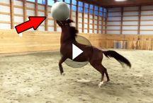 Pferd e