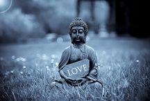 Buddha Quotes / 0