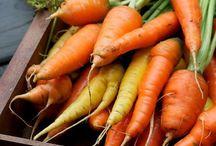 carrot growing