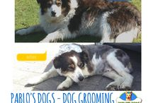 Dog grooming / Before and after dog grooming pictures in Rotorua