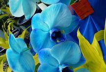 flowers / by Viviana Salgado