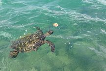 Kauai Sealife / Monk Seals, Dolphins and Honu! And everything else in the ocean!