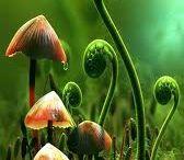 forest & mushrooms