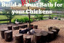 Chickens and such / by Cindy Rodgerson