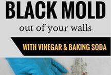 kill black mold
