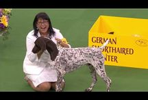 Dog Shows / Best dog shows
