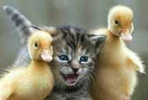 gatitos adorables