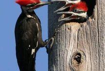 Birds of a feather / Beautiful bird photography