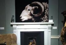 Arty Sheep