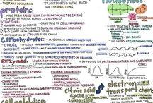 Molekylær biologi