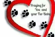 PRAYERS FOR FUR BABIES