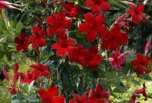 nádherné květiny- mísy, truhlíky, závěsy