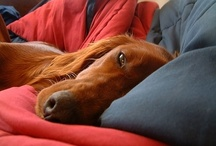 Ginger Love