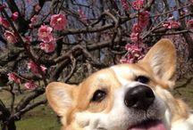 good doggos maymay