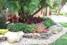 beas garden / a mix of sub tropic plants and Native New Zealand flax & grasses.