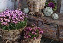 Цветы и шишки в корзинах