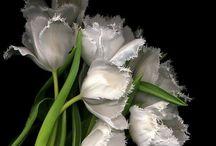 Blooming Beauty Black