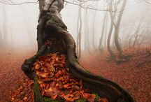 Fotografie Landschaft/Natur