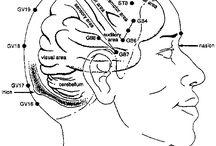 Acupunctura scalp