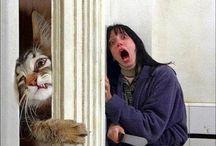 lol cats / Cats that make you laugh! / by Jacob Davis