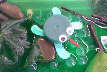 Ranas  / Actividades que hemos realizado  sobre las ranas.