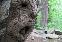 Nature Art