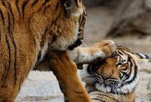 Reino Animal / animals