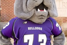 Spike! / Our mascot, Spike the Bulldog, spotted throughout the Truman State University campus!