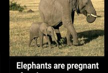 Elephants Interesting Facts