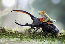 Animal Heroes / true heroes of nature #animals #nature