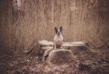 ANIMALS by INEXPERTPHOTO