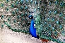Wildlife conservation at Sudeley Castle