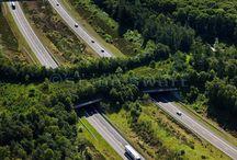 Wildlife Overpasses