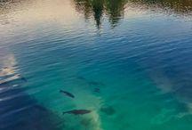 Nature - Water