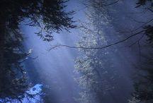 fotografie nature
