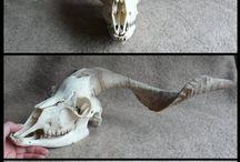 Skull shiet