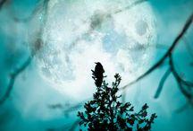 Moonlight..