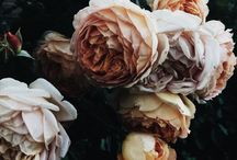 Moody Floral Inspo