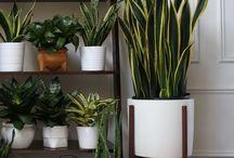Plants I like