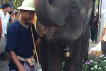 Visions of Thailand / Pictures from our buying trip to The beautiful and exotic land of the Thais